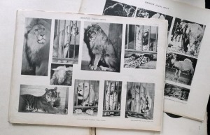 Nicht von Hanimann: Vorlagenwerk mit Lichtdrucktafeln (Matériaux & Documents d´Art Décoratif: Recueil de 470 Animaux & Oiseaux d´aprés Nature, Paris: Armand Guérinet, o. J. [um 1910])